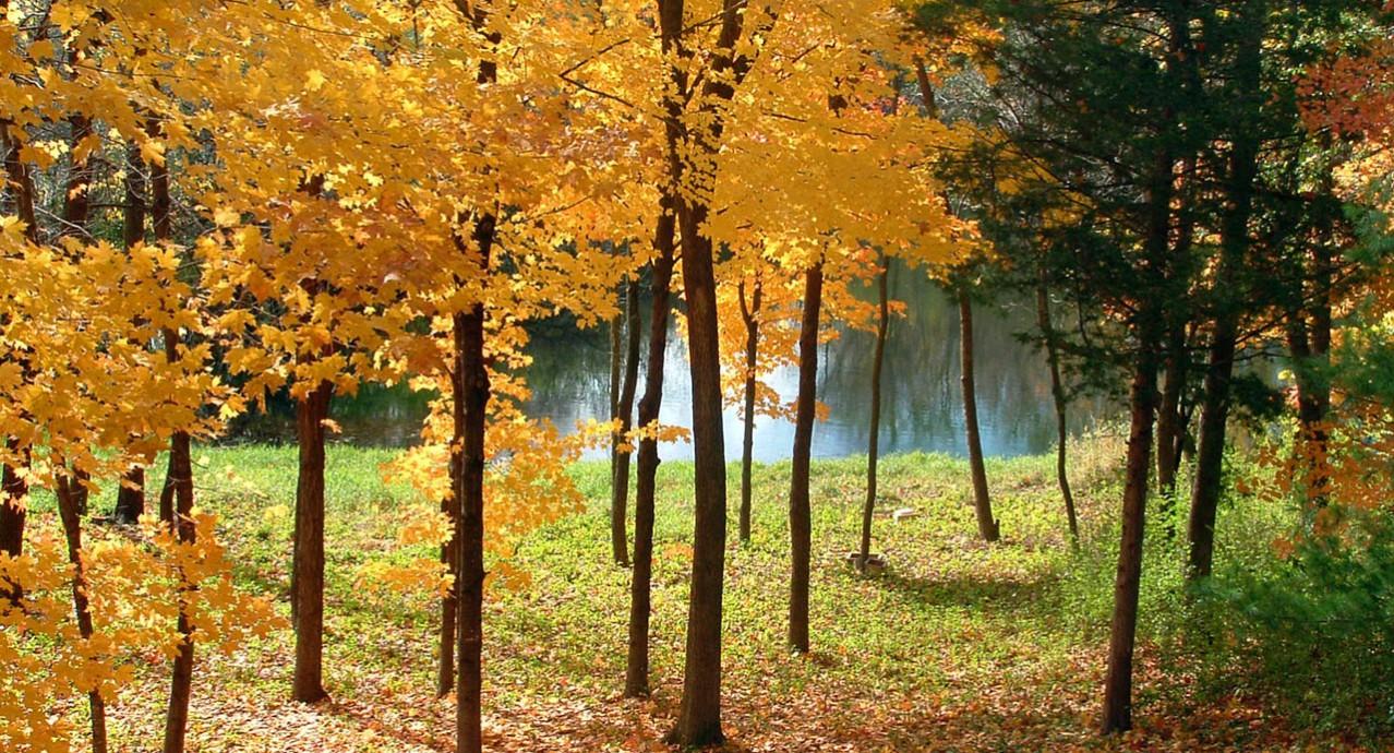 forêt_dordogne_perigord