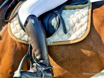 ANL_chevaux promenade