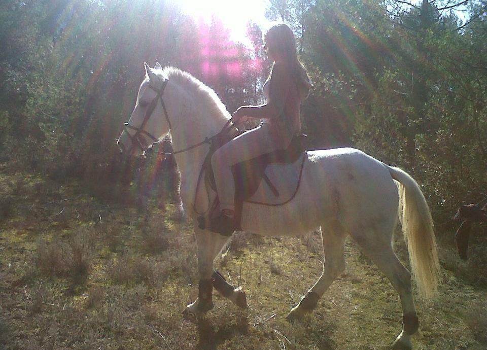 promenade_a_cheval
